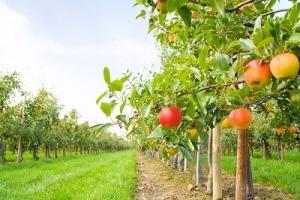 Тамбовским фермерам помогают в организации садоводческих хозяйств