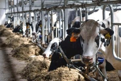 Тамбовская область увеличила производство молока