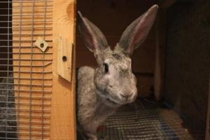 ВТамбовском районе содвора женщины украли двух кроликов