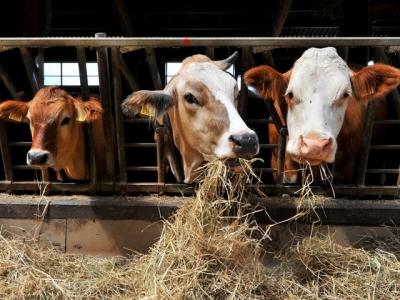 В Тамбовской области увеличилось производство мяса, молока и яиц