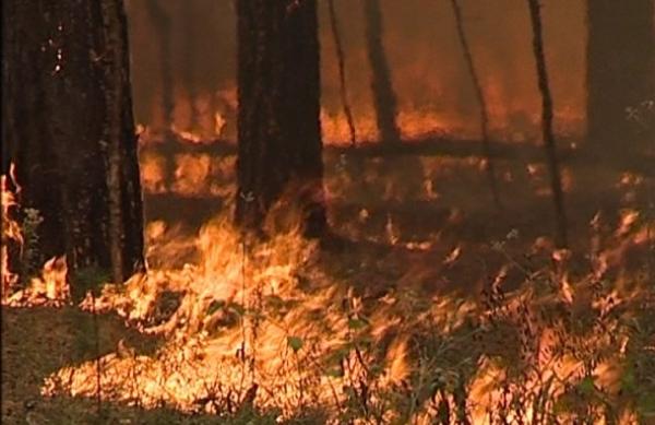 Пожар уничтожил 5 гектар леса на Новой Ляде