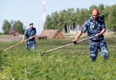 В Тамбовской области началась сезонная борьба с растительными наркотиками