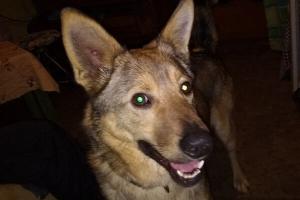 В Тамбове пёс спас хозяев во время пожара