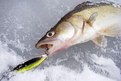 На Котовском водохранилище соберутся лучшие рыболовы области