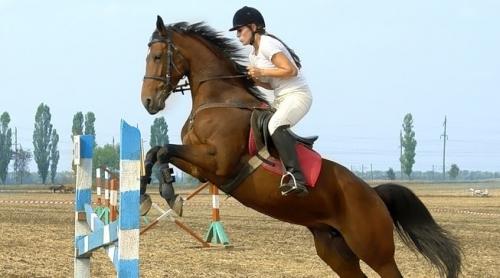 В субботу тамбовские конники разыграют кубок ипподрома в конкуре