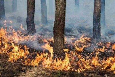В Тамбовском лесничестве произошел пожар
