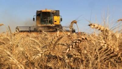 Урожай зерновых в Тамбовской области – 4,3 миллиона тонн