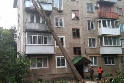 В Тамбове во время опиловки дерево рухнуло на пятиэтажку
