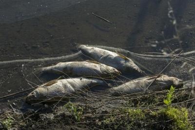 """Тракториста """"Тамбовского бекона"""" оштрафовали на 40 тысяч рублей за отравление реки"""