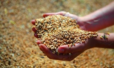 Тамбовская область планирует собрать не менее 4 миллионов тонн зерна