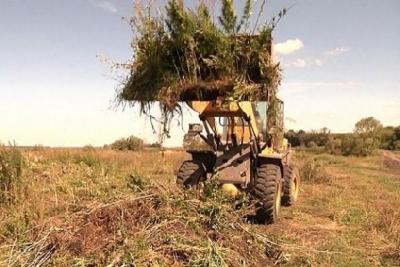 В Тамбовской области уничтожили две тонны марихуаны