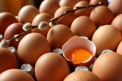 У Тамбовской области нет потребности в строительстве крупных яичных птицефабрик