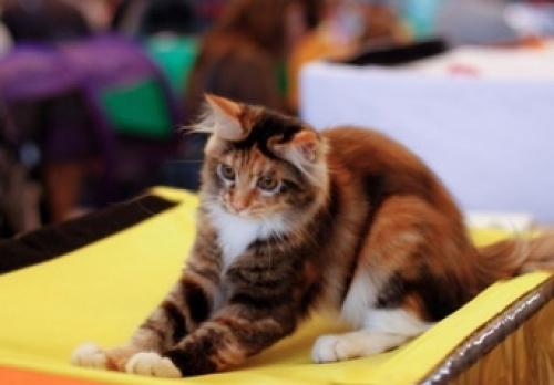 Международная выставка кошек пройдет в Тамбове