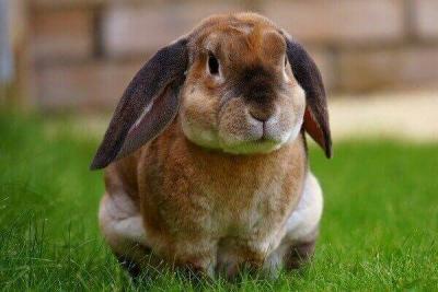 У тамбовчанки за долги по кредиту арестовали 45 кроликов