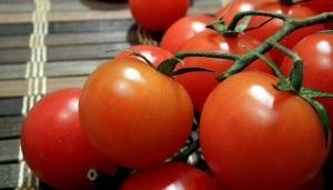 Турецких помидоров в тамбовских магазинах станет больше